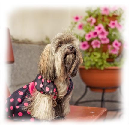 Одежда для собак f5aa8538661
